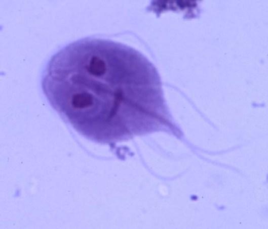 giardia-trph1